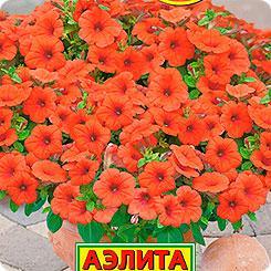 Оранжевая петуния Джоконда