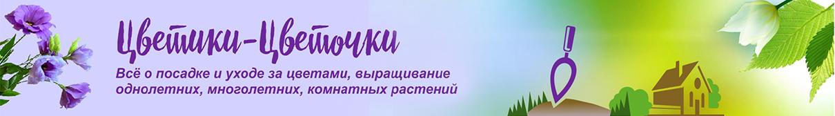 Логотип сайта Цветики-Цветочки