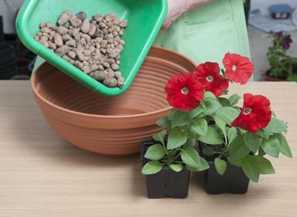 Особенности выращивания петунии в кашпо