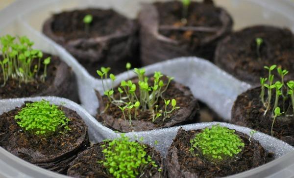 Этапы подкормки для хорошего роста
