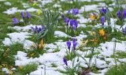 Благоприятные дни для посадки цветов на март 2019 Лунный посевной календарь цветовода на март Таблица