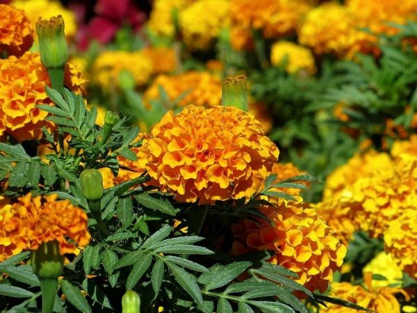 Описание цветов