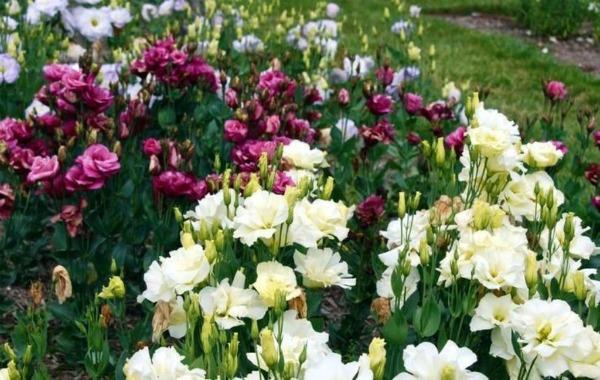 Как повысить цветение