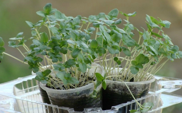 Проблемы выращивания