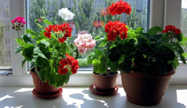 Что нужно для цветения