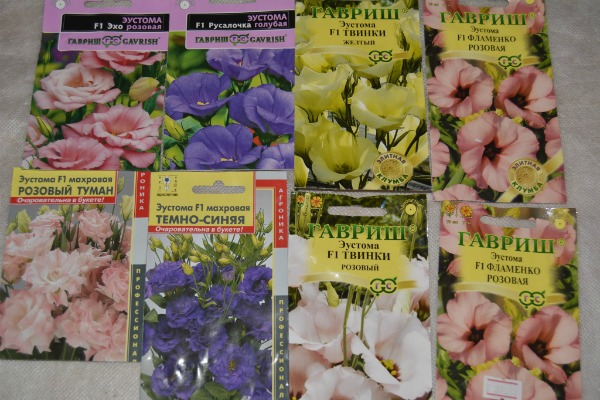 Выбор семян и подготовка к посеву
